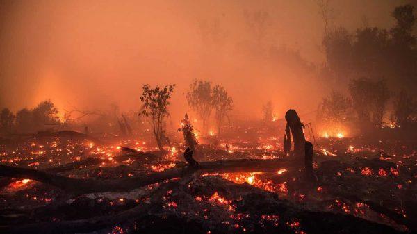 Orman Yangınları Mikrop Taşıyor