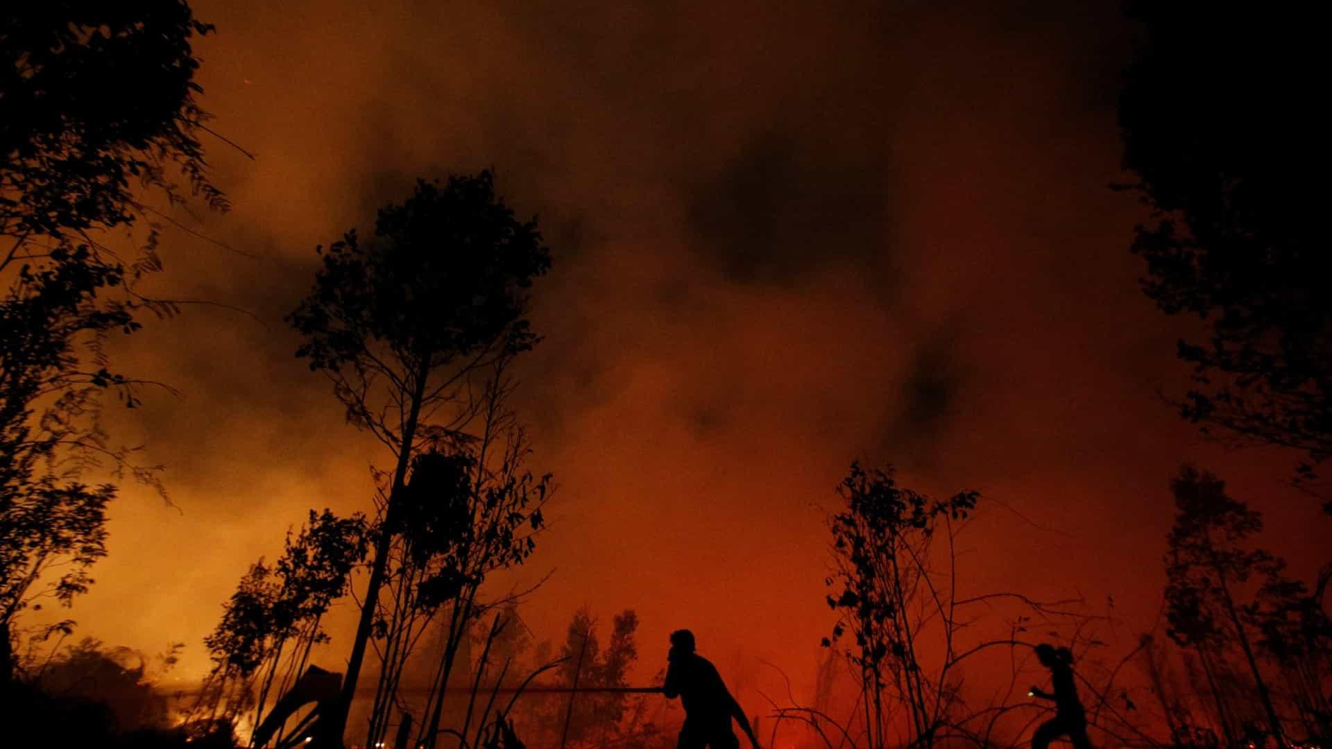 Orman yangını dumanı aslında bir ekosistem için yararlı organizmaları yayabilir