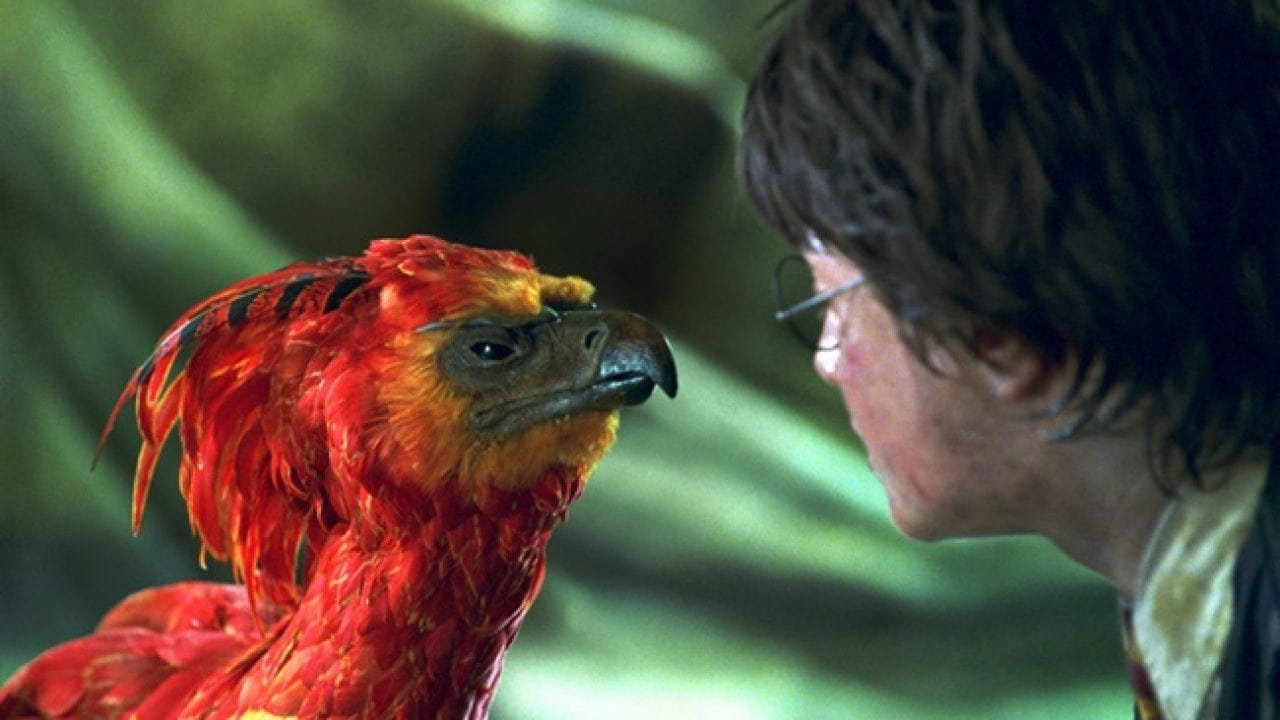 Harry Potter, Prof. Dumbledore'un odasında Anka ile karşılaşıyor