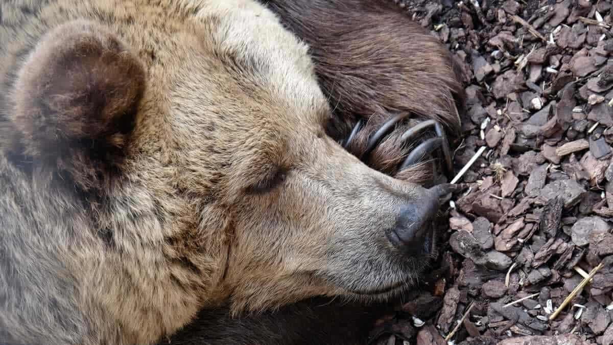 Bütün Hayvanlar Aynı Şekilde Mi Kış Uykusuna Yatar