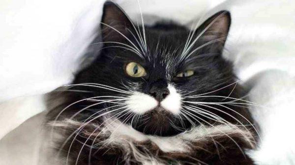 sinirli bir kedi