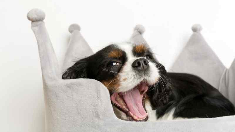 esneyen küçük köpek