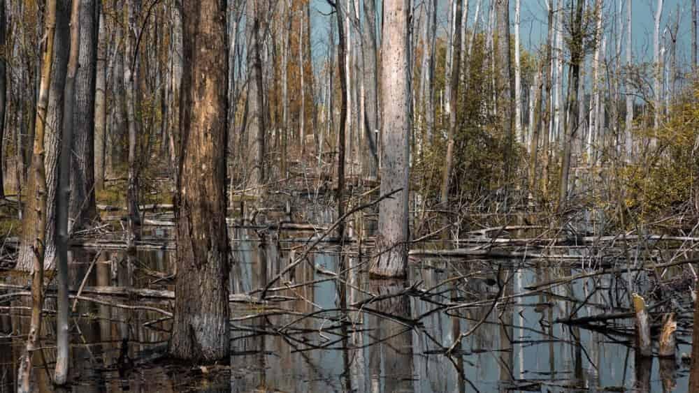 Hayalet Orman Nedir - Nasıl Oluşur