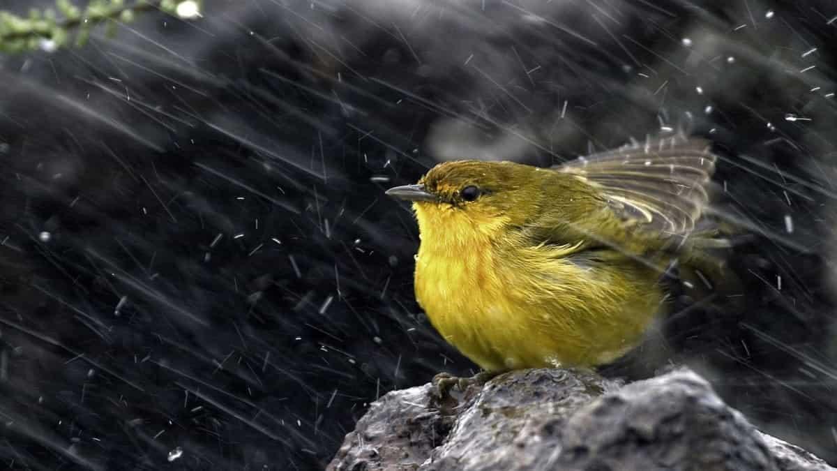 Kuşların Yağmura Karşı Aldığı Önlemler