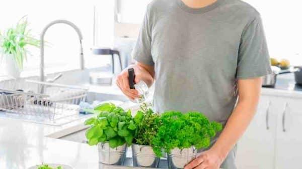 evde hangi bitkiler yetiştirilir
