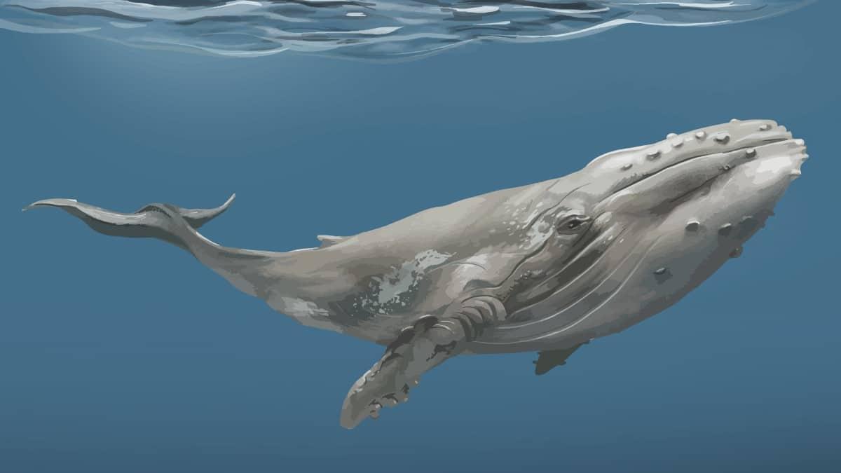 Balinalar Zararlı mı