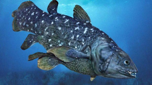 Yüzyıldır Yaşayan Balığın Garip Biyolojisi