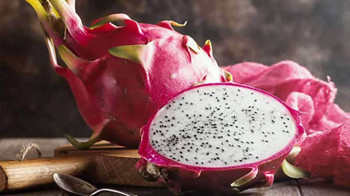 Ejder Meyvesi Nedir - Nasıl Yetiştirilir