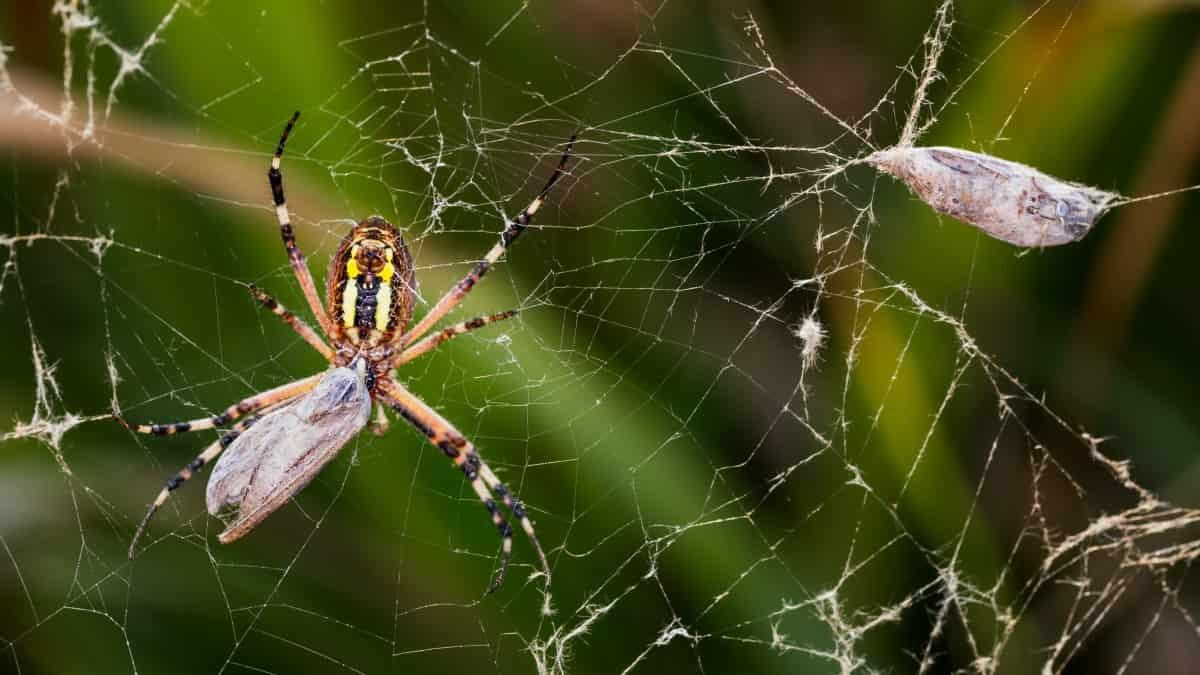 Örümcekler ve Böcekler